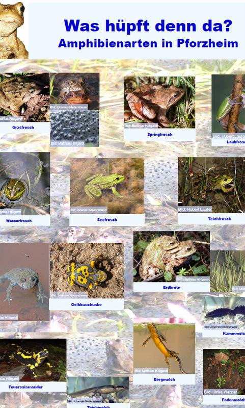 Bild: Amphibien in Pforzheim