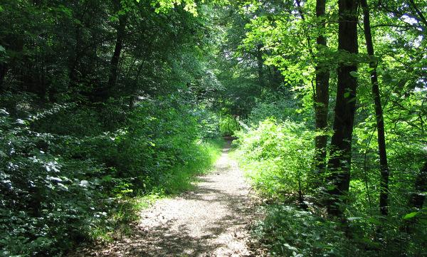 Bild: Waldweg beim Malschbach (c Keitel)